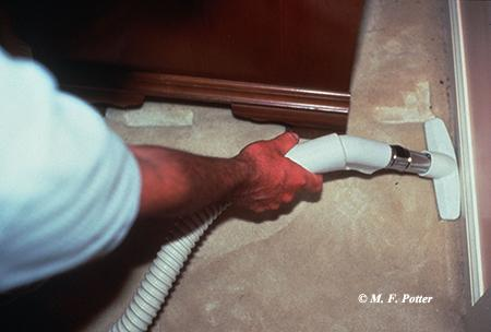 Removing accumulations of lint and hair can help prevent problems with carpet beetles.