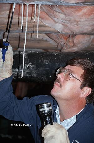 Termite inspections and treatments are best accomplished by professionals.