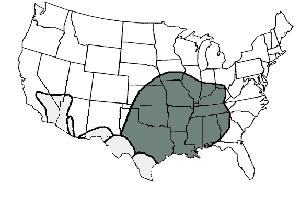 Distribution of the brown recluse spider (dark shading) and other species of Loxosceles spiders in the U.S. (light shading)