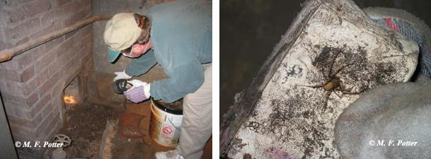 Thorough inspections are needed to detect and treat hidden infestations.