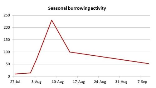Graph: Cicada Killer Burrowing Activity