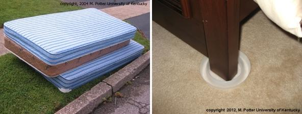 Discarded mattresses and bed bug traps