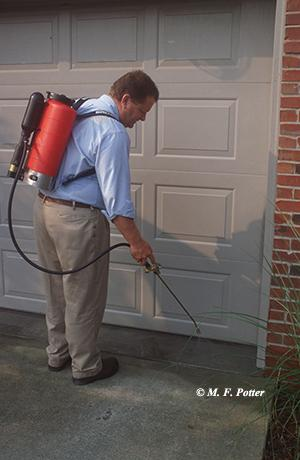 Insecticide sprays can often help deter spiders and other pests from entering homes.