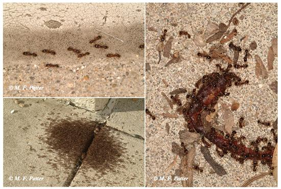 Worker ants forage for food and nourish the rest of the colony.