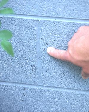 Ant Control for Homeowners Entomology