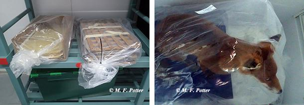 Prior to freezing, items should be wrapped in plastic.