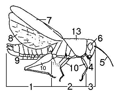 La entomología básica | Entomology