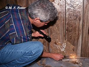 Termites are capable of inflicting costly damage.