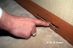 Mối nguy hiểm.  Thiệt hại này được phát hiện khi một đầu chân không xuyên qua một tấm ván chân tường.