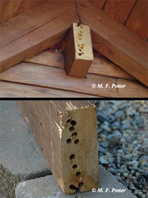 Carpenter bees often repeatedly infest the same areas.