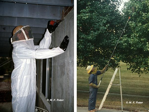 Protective clothing is advisable when treating wasp and hornet nests.