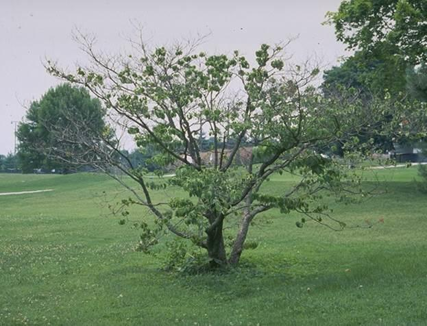 Insect Borers Of Trees And Shrubs Entomology