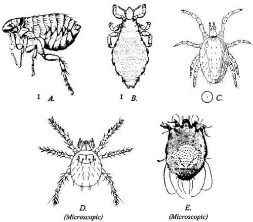 Invisible Itches Insect And Non Insect Causes Entomology