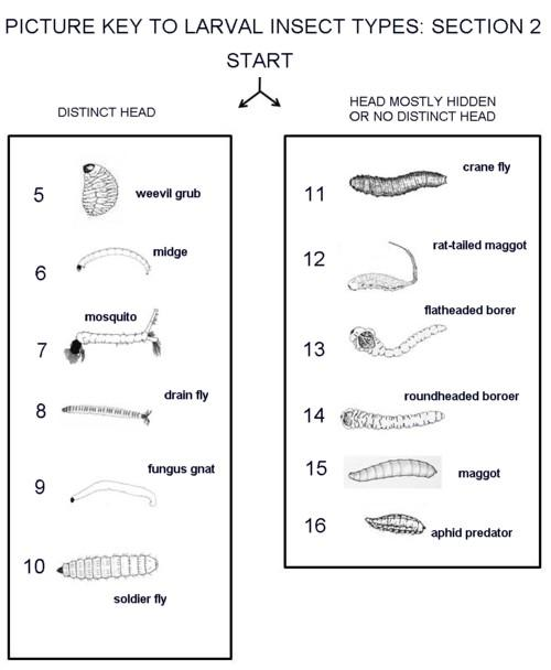 Recognizing Insect Larval Types Entomology