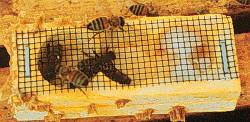 Queen Bee Box