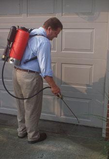 Un profesional pulveriza unas grietas en el pavamiento donde hay indicios de las hormigas.