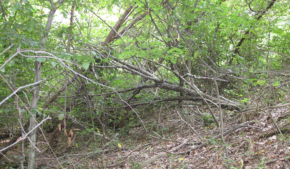 Coarse woody debris accumulation alters trophic interactions