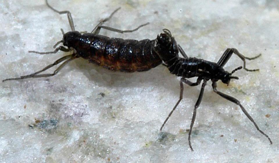 Why study Entomology at WSU?